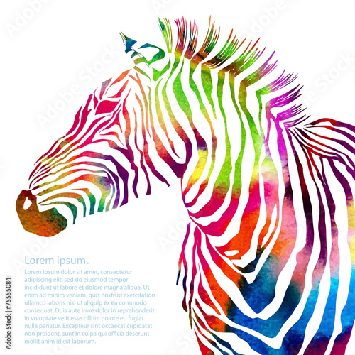 Animal illustration of watercolor zebra silhouette - 75555084