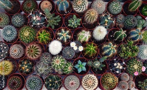 Fotobehang Cactus Cactus