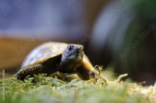 Fotobehang Schildpad Junge Schildkröten 3
