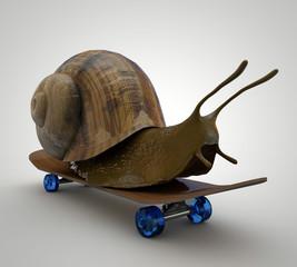 Skateboarding Snail