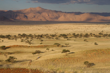Namibian Landscape at hte sunset