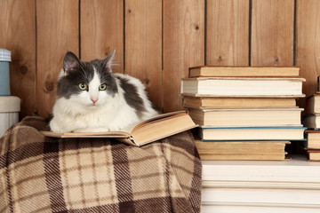 Cute cat lying with book on plaid