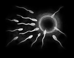 Fertilization of sperm and egg