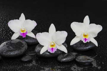 Set of three white orchid on wet stones –wet background