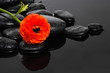 still life with black pebbles and ranunculus flower