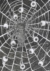 Ink Illustration evil Spider