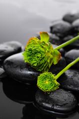 Lying down green hydrangea bud on stone on wet