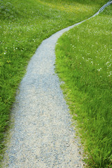 Path in green meadow