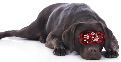 Hund mit Schlafmaske