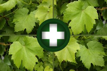 Phytothérapie - Vigne - Soins par les Plantes