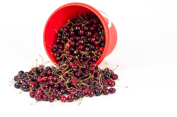 bucket with cherry isolated on a white background