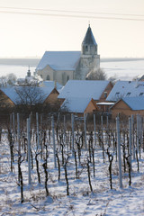 Hnanice with winter vineyard, Czech Republic