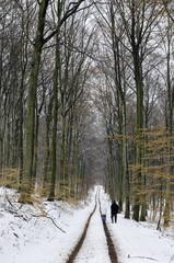 Winterspaziergang im Schnee 12