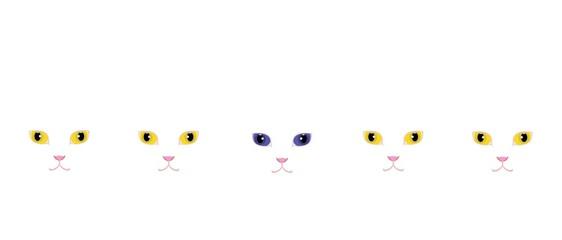 黄色い目の白猫と青い目の白猫