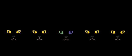黄色い目の黒猫とオッドアイの黒猫