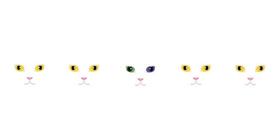 黄色い目の白猫とオッドアイの白猫