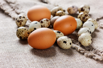 speckled quail eggs and chicken eggs on a rustic background