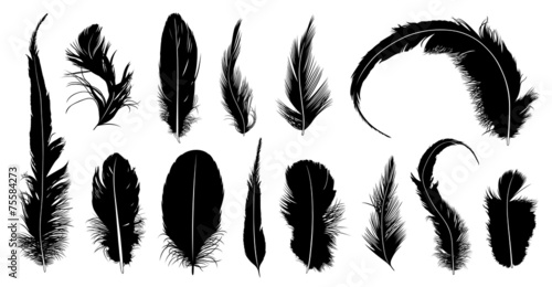 Set of different feathers isolated on white - 75584273