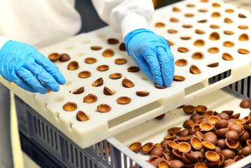 Lebensmittelindustrie Pralinenfertigung // Food Industry
