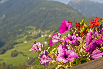 Flowers in Austrian rural landscape