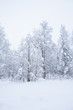 Forest trees covered in snow - 75586252