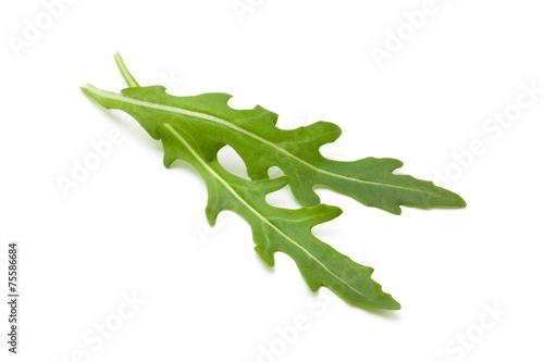 Fototapeta Fresh arugula leaves.