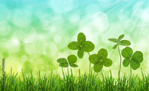 Close-up shot of four-leaf clovers in a field.