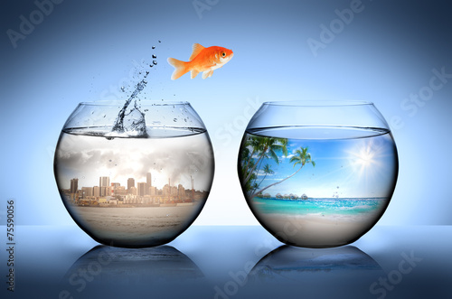 goldfish jumping away from city for go to tropical beach poster