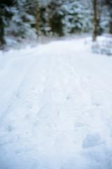Weg im Winterwald