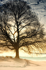 bench under a tree 92)