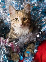 Gatito y Navidad.