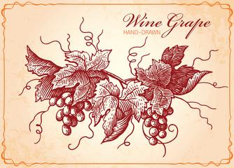 Wine Grapes Vintage Style Illustration