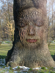 woman's face embedded in the bark of the tree