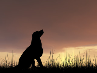 Dog silhouette in grass at sunset