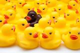 patos amarillos