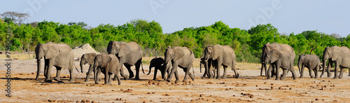 Plexiglas Olifant Herd of elephants