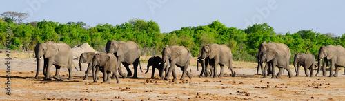Herd of elephants - 75604286