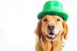 St. Patrick's Day Dog - 75605839
