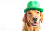Photo: St. Patrick's Day Dog