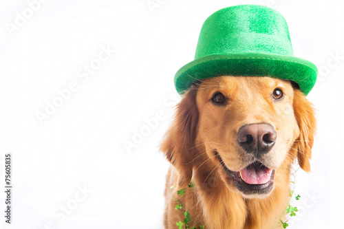 Foto op Canvas Hond St. Patrick's Day Dog