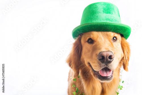 St. Patrick's Day Dog - 75605835