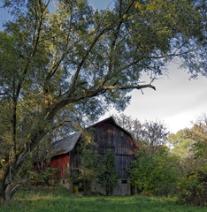 Overgrown Barn.
