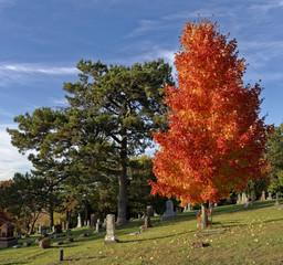 Blazing Cemetery Tree.