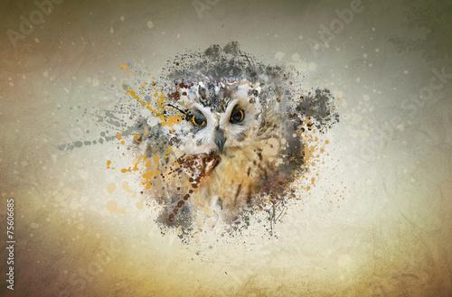 Foto op Plexiglas Uil Owl concept