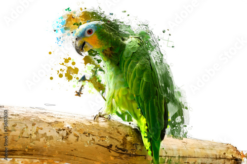 Fotobehang Vogel Green parrot on the branch, abstract animal concept
