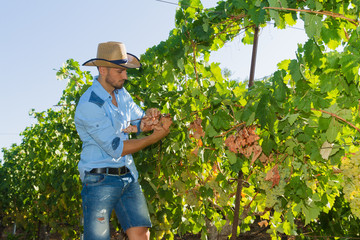Young man, vine grower, in the vineyard.