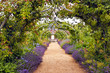 canvas print picture - Colourful English summer flower garden with a path under archway