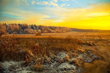 Field, forest, dry grass - beautiful landscape at sunset