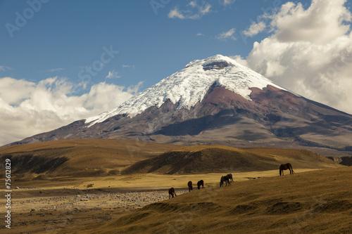 Leinwanddruck Bild Cotopaxi volcano and wild horses