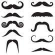 Moustache collection - 75614055